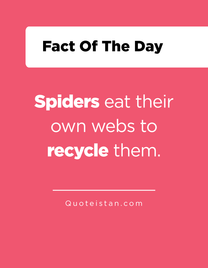 Spiders eat their own webs to recycle them.