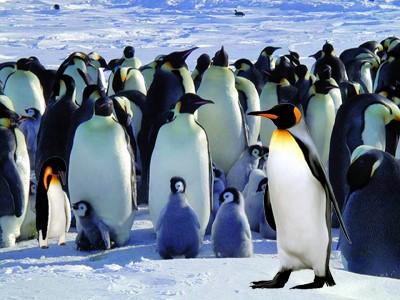 penguins flee