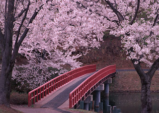 https://www.tsunagujapan.com/17-facts-you-probably-didnt-know-about-sakura/