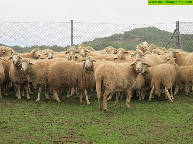 Ayudas para agricultores y ganaderos  Canarias 2018