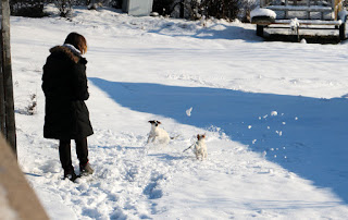 A kicking snow for the puppies to chase