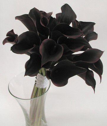 buquue tulipa