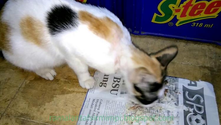 Unduh 95+  Gambar Kucing Sedang Makan Terbaru