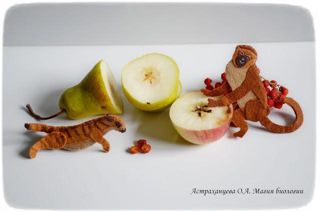 klassifikacija-plodov-sochnye-surikat-martyshka-jabloko-grusha-rjabina