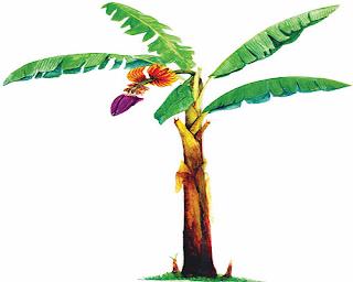 Perkembangbiakan Tumbuhan secara Tidak Kawin (Vegetatif)