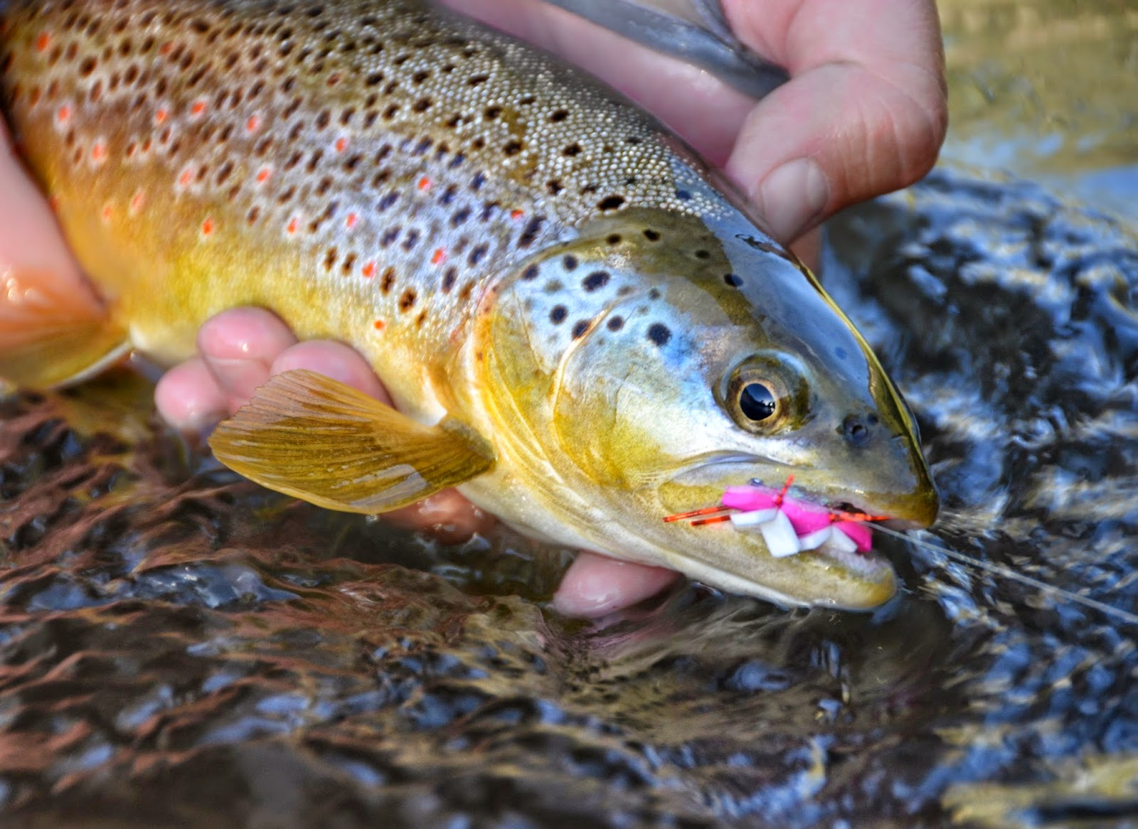 brown trout attractor pattern