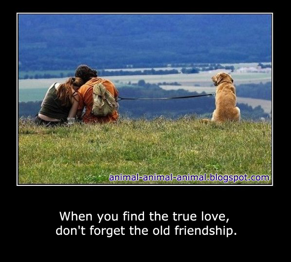 animal love meme - photo #35