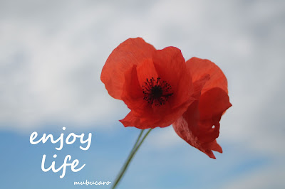 enjoy life, lifestyle, nature, coquelicots