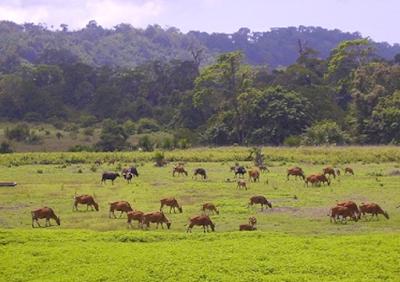 Menikmati Kedamaian di Taman Nasional Alas Purwo