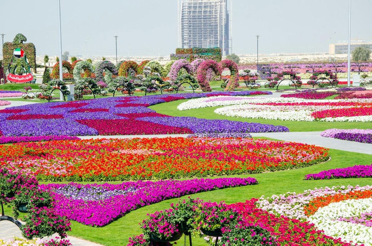 Wallpaper wallpaper dubai miracle garden for Landscape gardeners