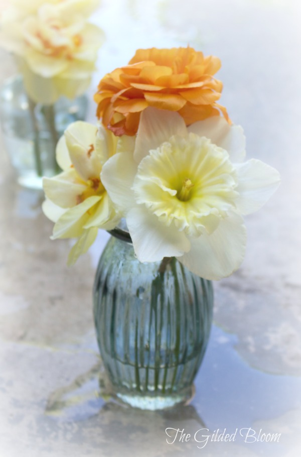 Daffodils and Ranunculus in Vase www.gildedbloom.com #floralphotography