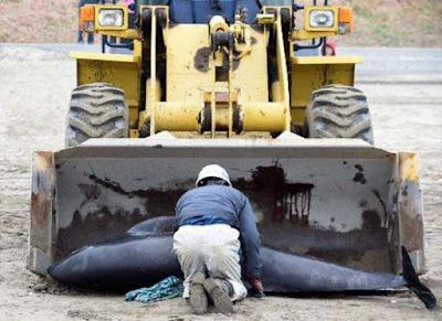 Un monito delle balene agli esseri umani?