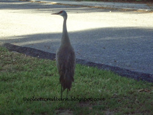 Eclectic Red Barn: Back of Sandhill crane