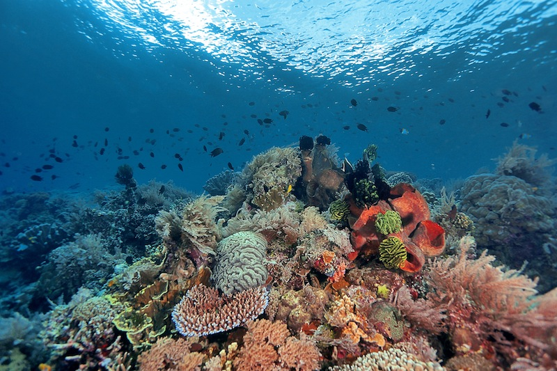 diving bunaken dive spot Timor