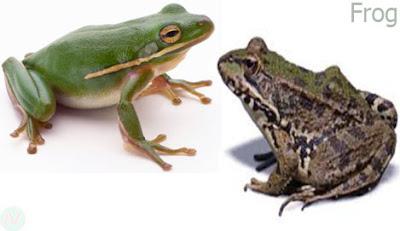 frog reptile