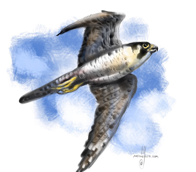 Peregrine Falcon bird painting by Artmagenta