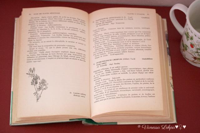 Vanessa Lekpa : recettes de tisanes détox pour le printemps , livre