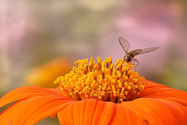 فوائد تناول معلقة صغيره من العسل قبل النوم