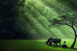20 Perbedaan Sel Hewan dan Sel Tumbuhan