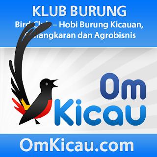 omkicau blog kounitas burung indonesia