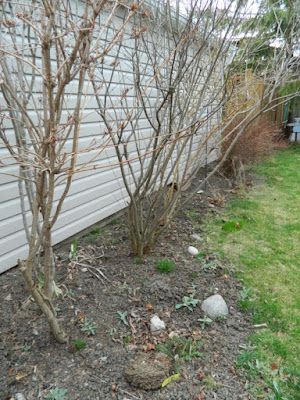 Dorset Park Scarborough back yard garden makeover before by Paul Jung Gardening Services Toronto