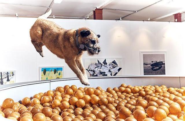 Ghé thăm hội chợ triển lãm dành riêng cho chó cưng