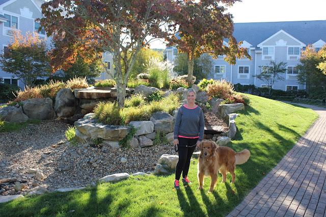 Miley walking around the gardens at Foxwoods Two Trees Inn dog friendly hotel golden retriever