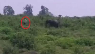 Pria Mabuk Selfie dengan Gajah Langsung Tewas Diinjak