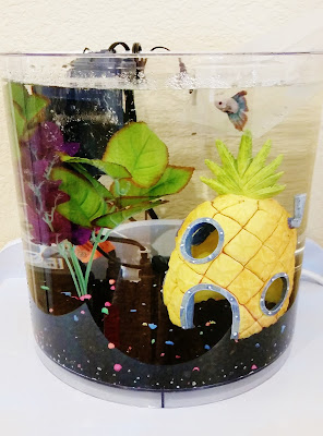Acclimating a new betta fish in an fish tank with a heater, filter, thermometer, and aquarium decorations