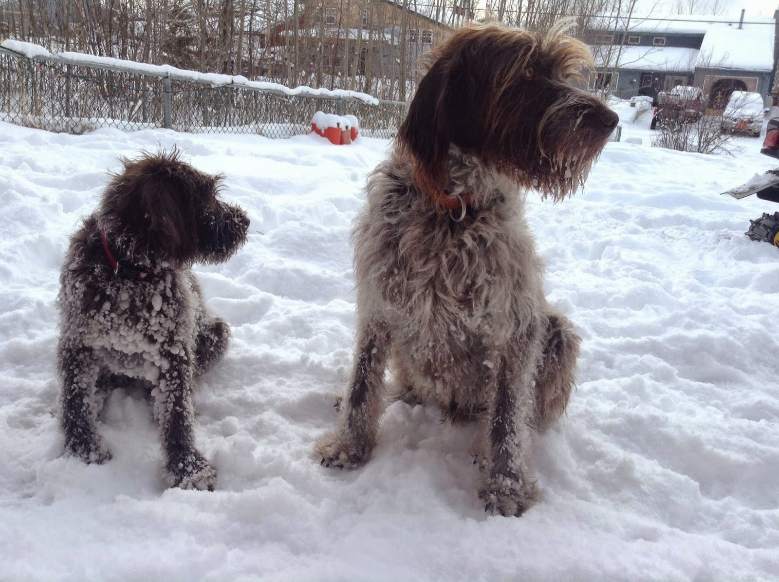 High Desert Griffons: Idaho: Our Friends and Pups From Past
