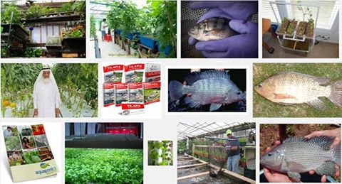 Tilapia Farming Guide