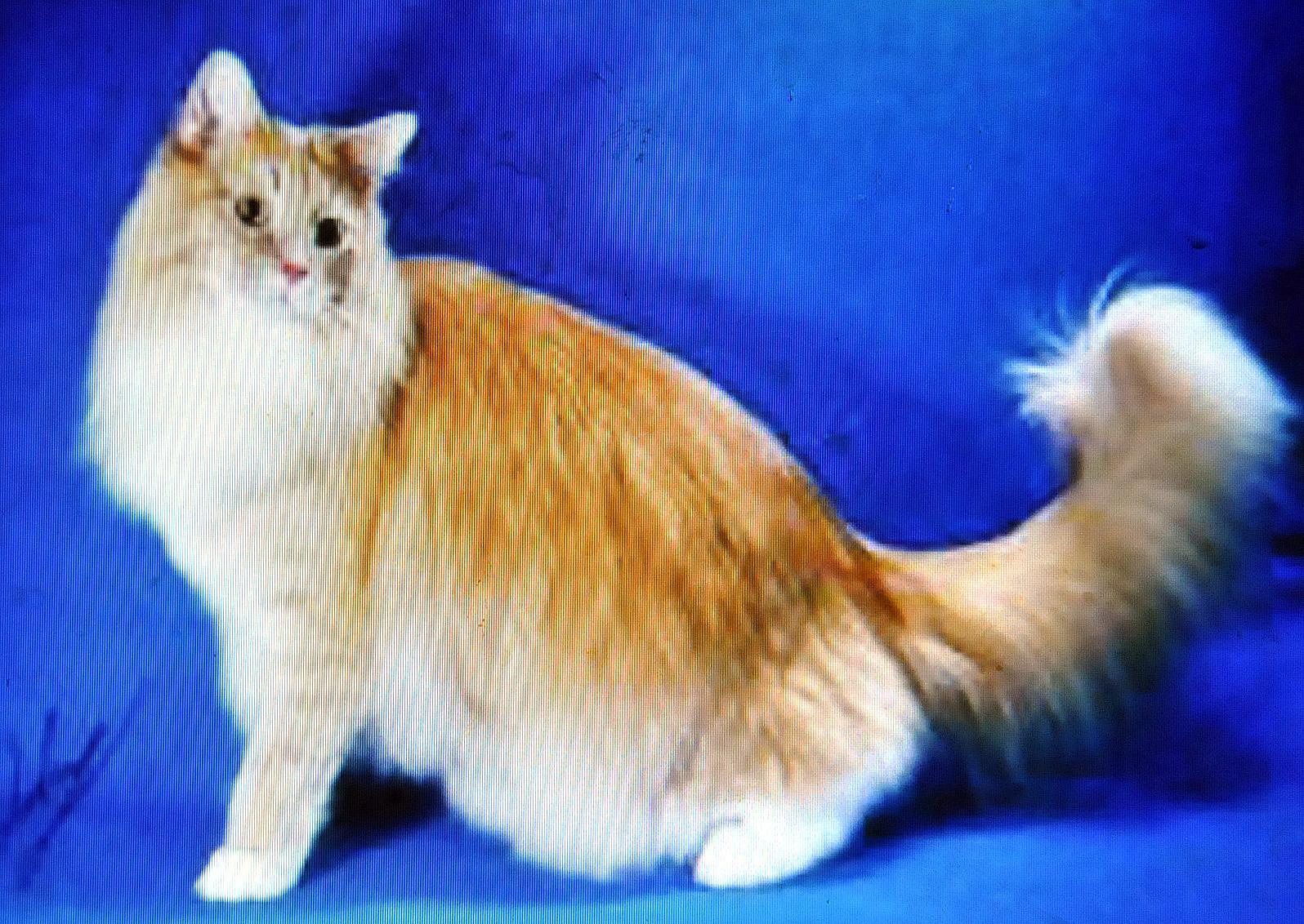 Gambar Kucing Yang Bagus godean.web.id