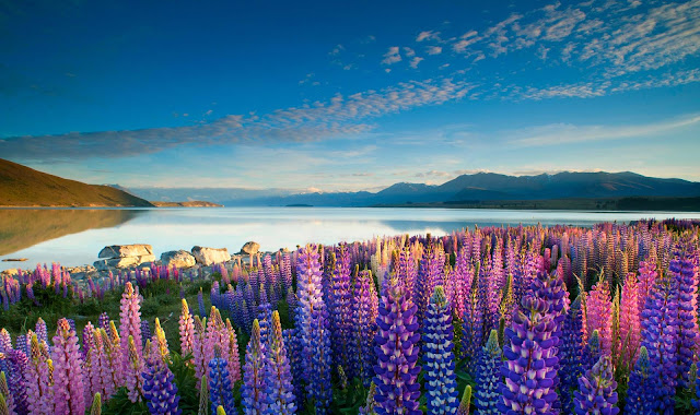 beautiful lake, new zealand, tekapo lake, ancient lake