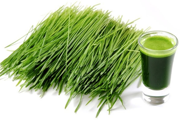 zielony jeczmien blog