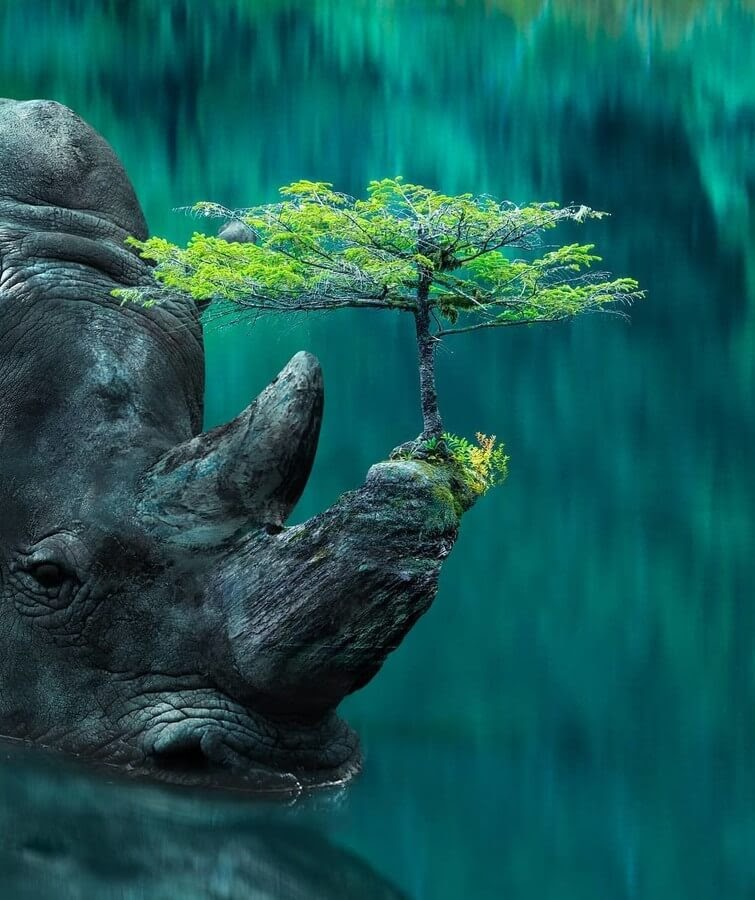 07-Rhino-Bonsai-Digital-Art-Martijn-Schrijver-www-designstack-co