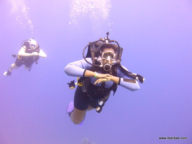Diving in the Red Sea - Sharm El Sheik