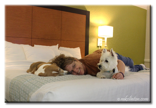 Woman with two dogs on bed