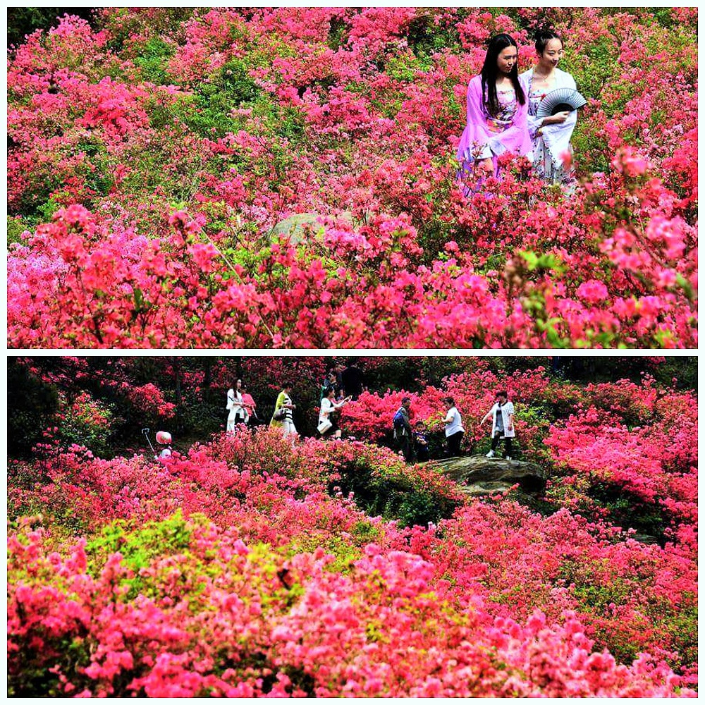 top flower bed destination travel in China