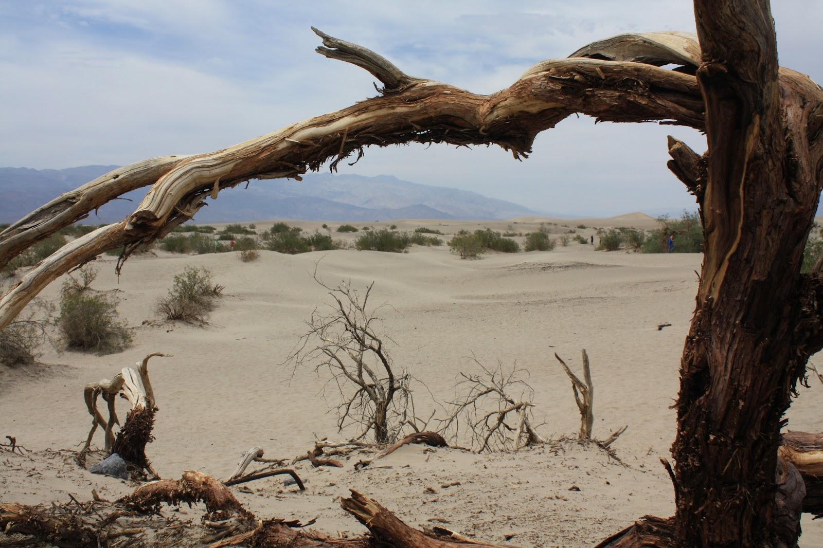 USA - Kanada 2013: Tag 6 - Rhiolyte - Death Valley - Lone ...