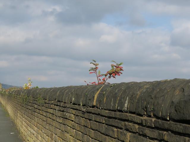 Young Rowan on long urban wall.