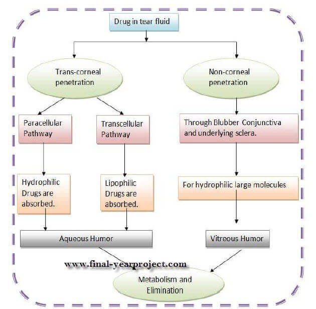 Ocular Drug Delivery flow chart
