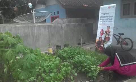 Luar Biasa! Sayur Organik Bebas Pestisida dari Halaman Rumah
