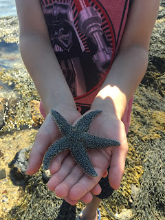 Acadia-National-Park-Maine-Seastar