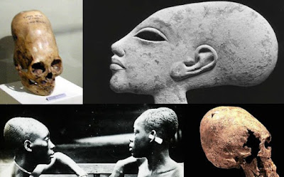 Ancient elongated skulls are not human.