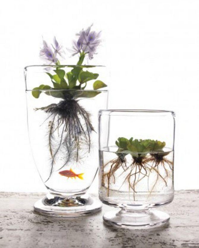 #Gardening : Natural water gardens