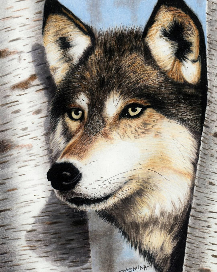15-Wolf-Jasmina-Susak-Realistic-Animal-Drawings-with-Colored-Pencils-www-designstack-co