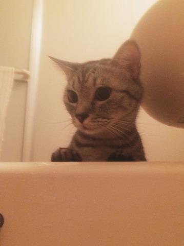 不思議そうに浴槽を見つめてる