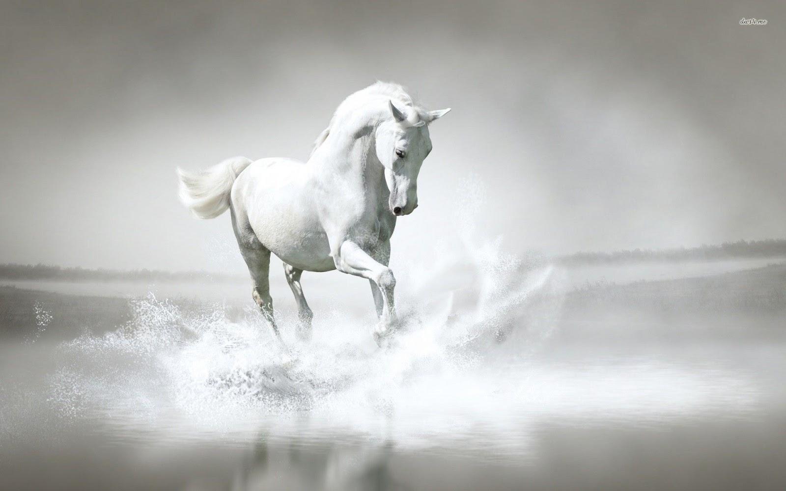 White Horse Hd Phtos Letest Wallpaper Hd Wallpaper