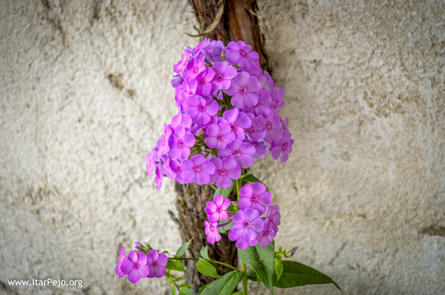 Flora, Mariovo region, Macedonia