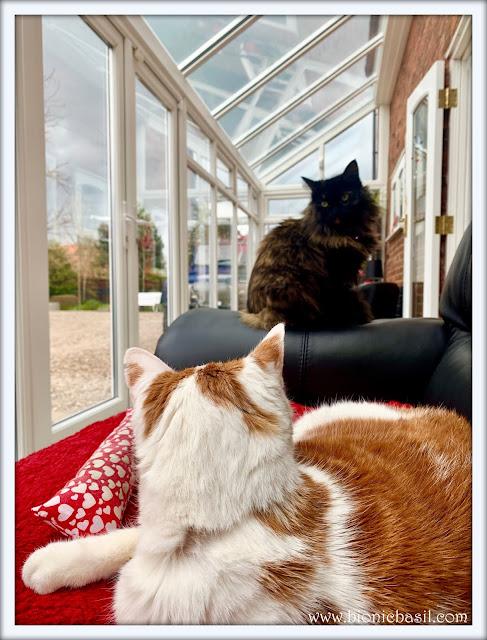 Amber and Pandora's Catservatory Selfies @BionicBasil® on Sunday Selfies